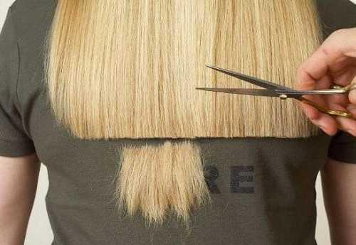 как подстричь когти коту: важная часть ухода за питомцем