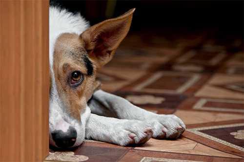 как отучить собаку грызть мебель, щенок грызет мебель