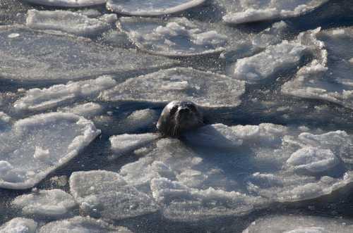 эци ледяной человек